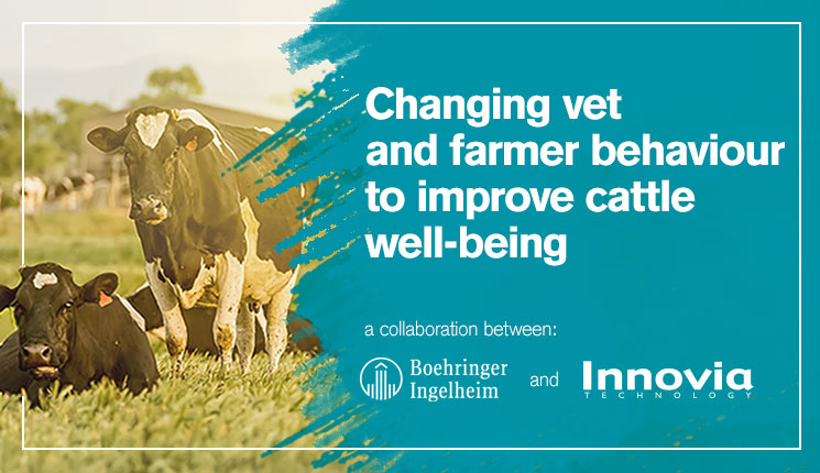 image Changing vet and farmer behaviour to improve cattle well-being